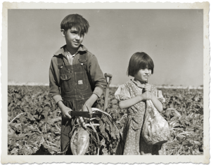 In Hall County, Nebraska children are harvesting sugar beets, October 1940.