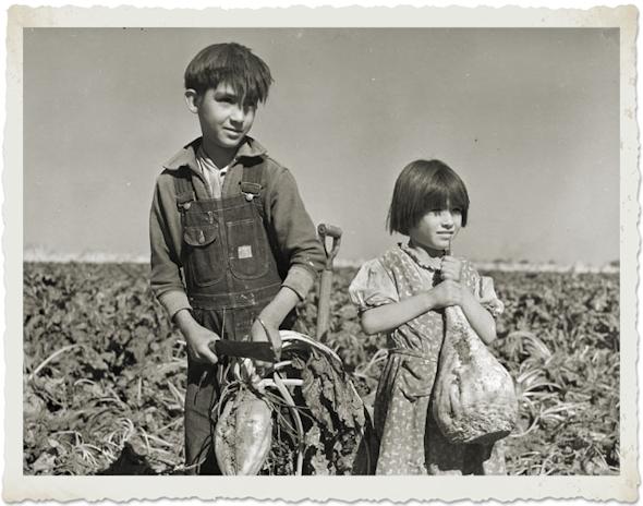 In Hall County, Nebraska children are harvesting sugar beets, October 1940.